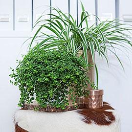 Inspiratie groene hangplanten - Decoreer zijn professionele kantoor ...