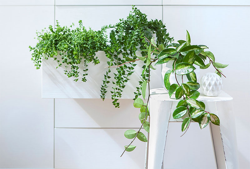 Inspiration Green Hanging Plants