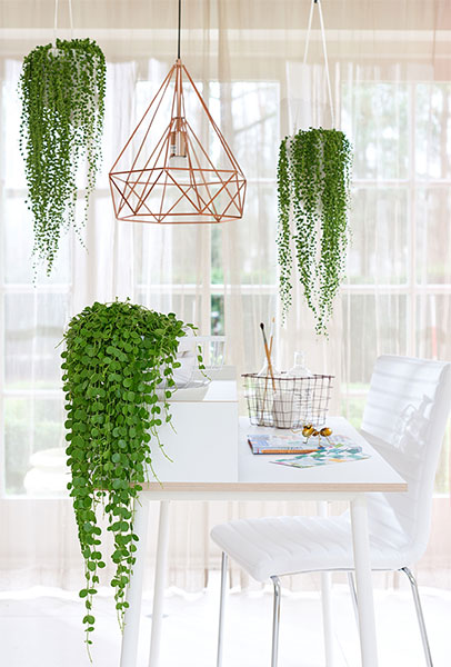 Grenen Hang En Legkast.Inspiration Green Hanging Plants
